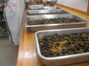 Ben worked in the camp kitchen to make several blackberry cobblers after campers did lots of blackberry picking.